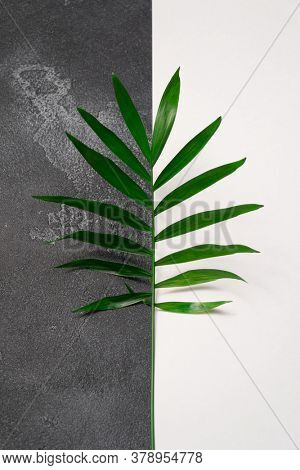 Green plant leaf on dark concrete and white paper background. Flat lay, top view, minimal design template with copyspace.