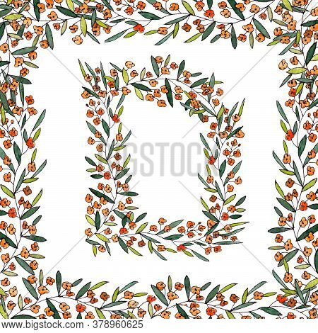 Letter D Of The English And Latin Floral Alphabet. Graphic In Square Frame On A White Background. Le
