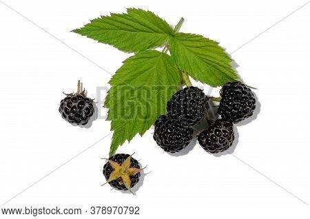 Black Raspberry On A Wet Leaf, Isolated On A White Background. A Few Ripe Blackberries.
