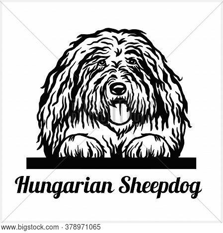 Hungarian Sheepdog - Peeking Dogs - Breed Face Head Isolated On White