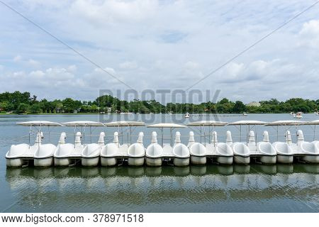 Row Of White Swan Spinning Pedal Boats On Water In A Lake Of Public Park, Greenery Trees, Shrub And