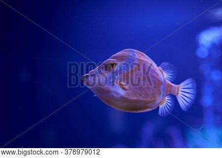 Raor Fish Swimming In The Sea. Algae, Rocks, Luminosity, Ocean