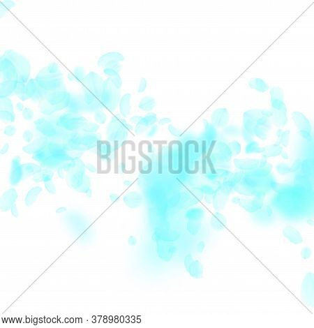 Turquoise Flower Petals Falling Down. Excellent Romantic Flowers Falling Rain. Flying Petal On White