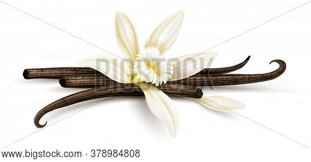 Vanilla flower with dried vanilla sticks and petal. Realistic food cooking condiment. Aromatic seasoning ingredient for cookery and sweet baking, Isolated white background. 3D illustration.
