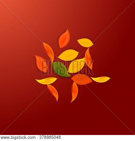 Falling Autumn Leaves. Red, Yellow, Green, Brown Neat Leaves Flying. Explosion Colorful Foliage On P