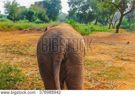Baby Elephant Back Side Portrait. Baby Elephant Playing On The Reserve Field With Isolated On Forest