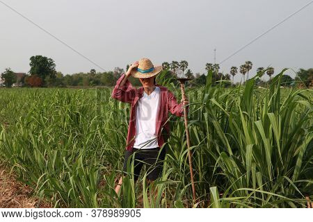 Man Farmer With Hoe In Hand Working In The Sugarcane Farm And Wearing A Straw Hat With Red Long-slee
