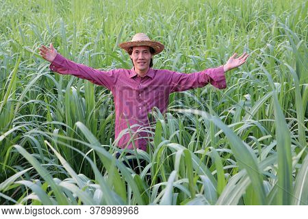 Man Farmer Standing With Both Hands Up And Wearing A Straw Hat With Red Long-sleeved Shirt In The Su