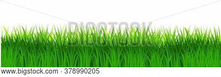 Grass Field Isolated Vector. Green Dense Juicy Lawn Grass. Spring Summer. Isolated. Grassland Landsc