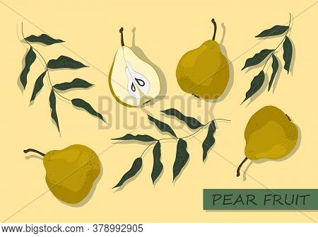 Vector Pears Set. Collection Of Isolated Hand-drawn Pear Fruits And Tree Branches. Pear Cut In Half.