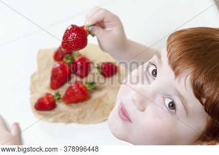 A Boy Who Will Soon Eat Ripe Sweet Strawberries Grown In The Garden At Home, Closeup