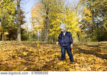 The Boy Walks In The Park In The Autumn Season, The Child Just Stands On The Fallen Yellow Foliage