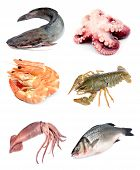 Collection of seafood on white background. Collage poster