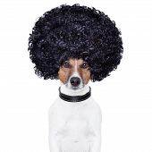 afro look hair dog funny black hair poster
