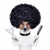 hairdresser dog with a scissors and  comb poster