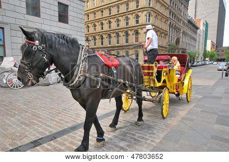 Horse drawn buggy