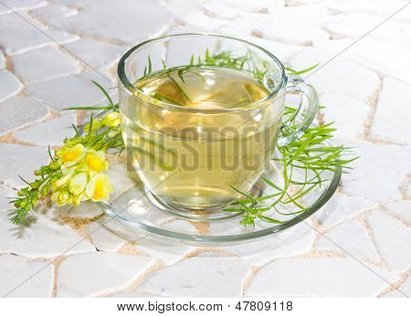 Cup Of Yellopw Toadflax Infusion