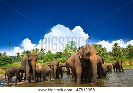 Elephants in beautiful landscape