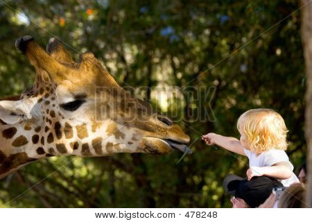 Child Feeding A Giraffe