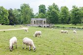 sheep with Palladin Bridge at background, Stowe, Buckinghamshire, England poster