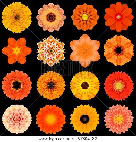 Big Collection of Various Orange Flowers. Kaleidoscopic Mandala Patterns Isolated on Black Background. Concentric Rose Daisy Primrose Sunflower Carnation Marigold Gerber Dahlia Zinnia Flowers in Orange colors. poster