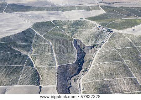 Vineyard Farm Near Jerez.