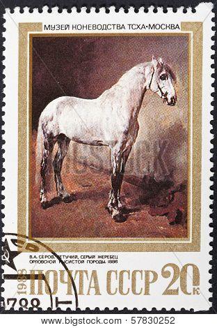 Gray Orlov Trotter Breed Horse