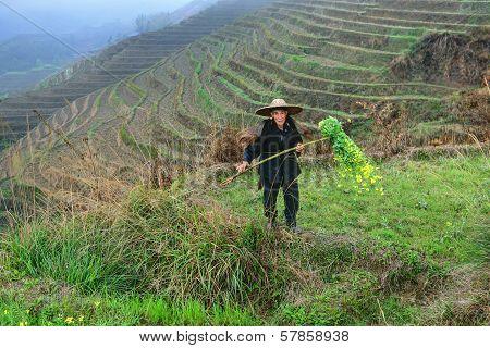 Asian Elderly Man, A Peasant Farmer Shepherd, Among Rice Terraces.