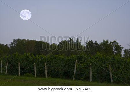 Moonrise over the vineyard.
