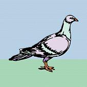 bird animal dove vector illustration cartoon free poster