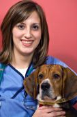 A young female veterinarian woman holding a beagle dog. poster