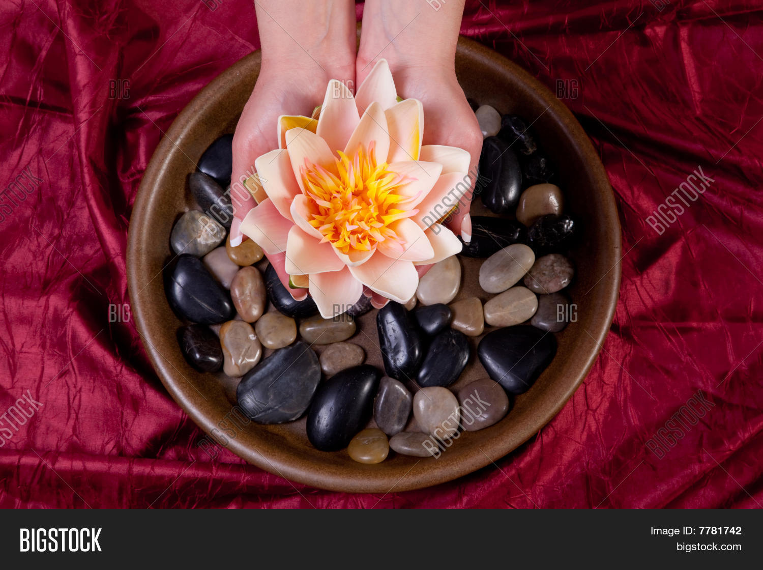 Hands Holding Lotus Image Photo Free Trial Bigstock