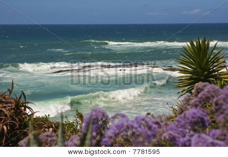 Laguna Beach Wave And Flowers