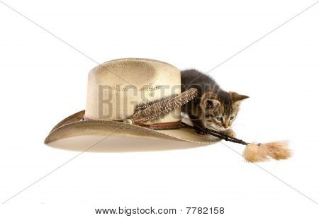 Kitten Playing With hat