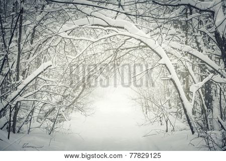 Snowy path through winter forest with overhanging heavy branches bending under snow and forming a tunnel. Ontario, Canada. poster