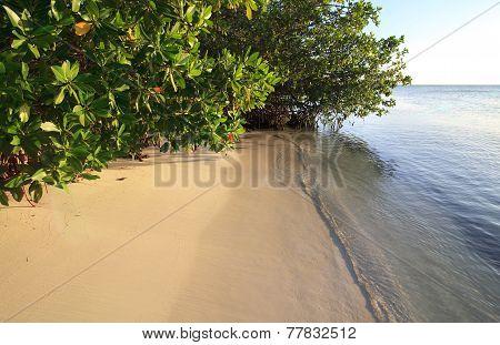 Pure white beach of the island of Cayo Guillermo. Atlantic Ocean. Cuba. poster