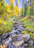 Silky flowing stream surrounded by fall foliage near Santa Fe NM poster