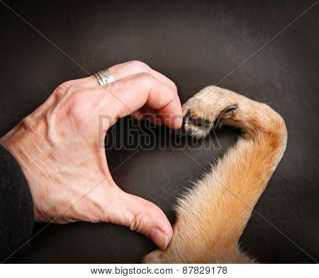 a person and a dog making a heart shape with the hand and paw
