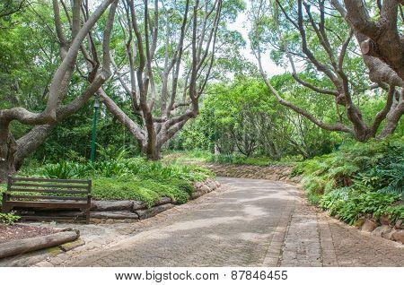 Walkway In The  Kirstenbosch National Botanical Gardens
