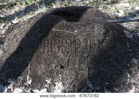 Big Ant Hill