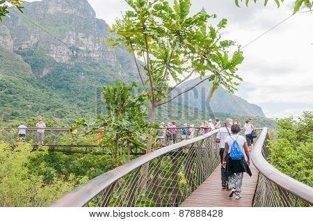 Kirstenbosch Tree Canopy Walkway, The Boomslang.