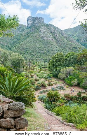 Kirstenbosch Botanical Gardens And Castle Rocks On Table Mountain