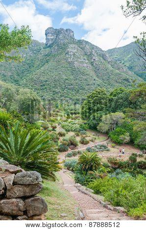 Kirstenbosch Botanical Gardens And Castle Rocks On Table Mountain