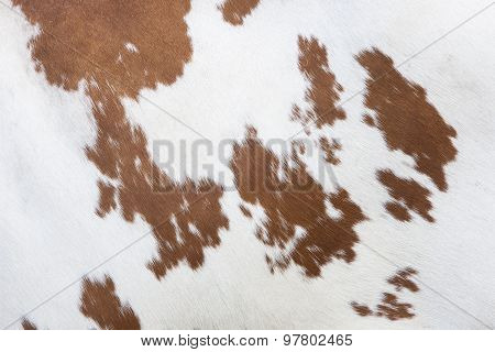 Side Of Cow With Red And White Hide