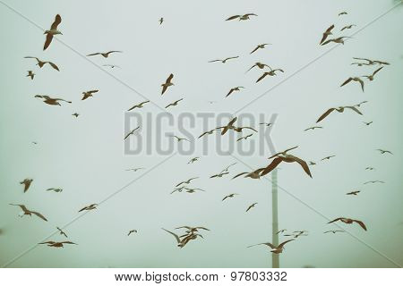 Apocalyptic scene of birds flying over the dump , retro style artistic toned photo