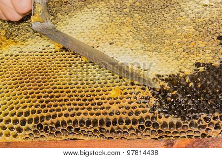 Honeycombs Filled With Honey, Opening The Cells