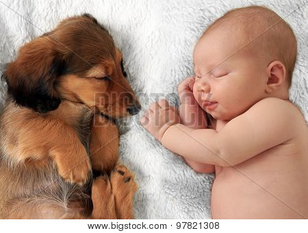 Newborn baby girl  and dachshund puppy asleep on a white blanket.