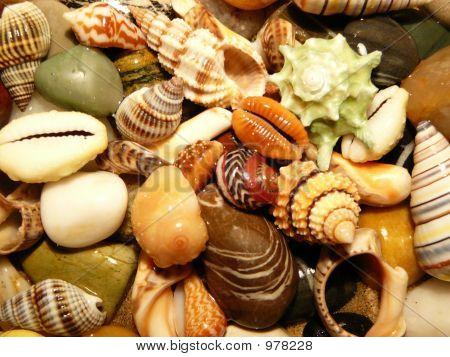 Shells Mixture