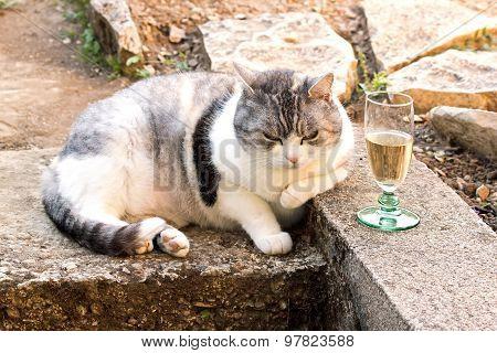 cat asleep near a glass. Cat sitting near a glass, seeming suffer the effects of alcohol.
