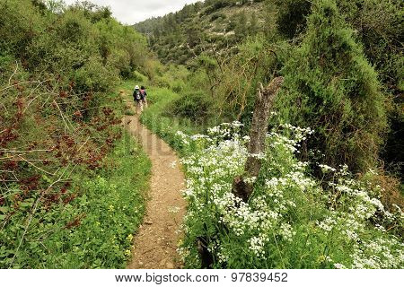 Spring Mountain Hiking In Jerusalem Mountains